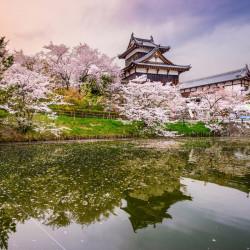 Giappone - Fioritura dei ciliegi