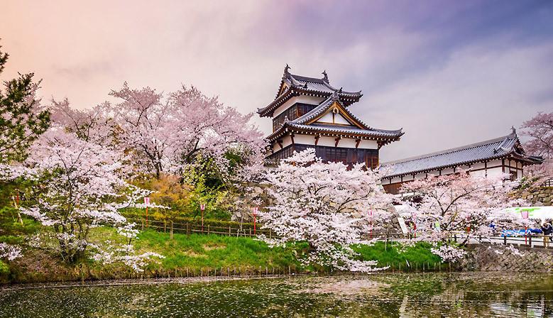 La fioritura dei ciliegi - Giappone